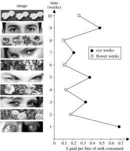Abbildung der Beiträge in eine 'Kasse des Vertrauens' nach Hinter¬grundbild aus Bateson et al. 2006: 413